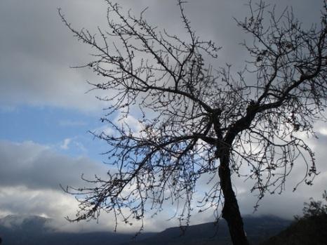 largas-ramas-acarician-viento.jpg