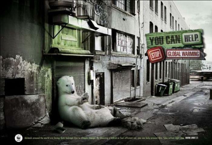 cambio-climatico-oso-polar1